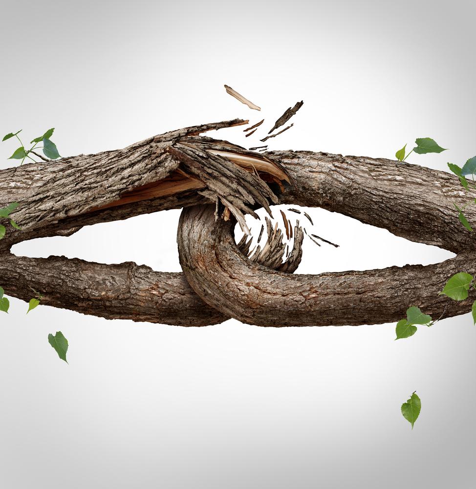 развод дерево треснуло